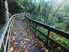 1000 Lugares en Galicia: Pasarelas del Cañón del Río Mao, en Parada de Sil.... Garden Bridge, Canon, Walkway, Cannon