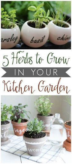 Herbs to Grow in Your Kitchen Garden (+ delicious ways to use them!), Five Herbs to Grow in Your Kitchen Garden (+ delicious ways to use them!), Five Herbs to Grow in Your Kitchen Garden (+ delicious ways to use them! Hydroponic Gardening, Hydroponics, Container Gardening, Organic Gardening, Gardening Tips, Indoor Gardening, Gardening Quotes, Indoor Plants, Fairy Gardening