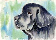Newfoundland Dog Art Original Watercolor by ClarityArtDesign Watercolor Animals, Watercolor Paintings, Watercolors, Gentle Giant Dogs, Dog Home Decor, Dog Portraits, Animal Paintings, Dog Art, Dog Lovers