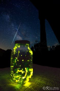 Fireflies!  How I remember my Grandmothers backyard and all the fond memories of catching fireflies as a child.  <3
