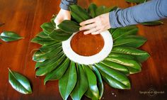 DIY Magnolia Wreath - Upright and Caffeinated - Projects to Try - Excellent DIY Magnolia wreath tutorial. Make this wreath for under five dollars using magnolia leav - Magnolia Garland, Magnolia Leaves, Diy Garland, Diy Wreath, Wreath Making, Wreath Ideas, Christmas Wreaths, Christmas Decorations, Christmas Time