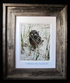 Burrowing Owl by PhotosbySuzanne on Etsy, $125.00  8 x 10 print, frame measures 11 x 14