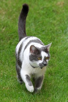 white and gray cat                                                                                                                                                                                 More