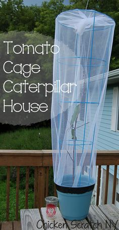 AWESOME!!  DIY Tomato Cage Caterpillar House