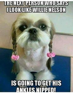 Rules Quotes, Funny Quotes, Funny Memes, Funny Animal Pictures, Cool Pictures, Dog Minding, Willie Nelson, Cute Dogs And Puppies, Can't Stop Laughing