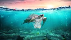Biosheet - Clean kitchen sink, clean hands. Ocean Pollution, Plastic Pollution, Green Day, Go Green, Garbage In The Ocean, Plastic In The Sea, Save Our Oceans, Exotic Fish, Save The Planet