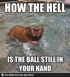 Shocked dog.