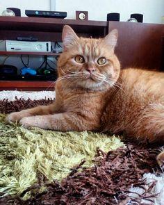 😻 lindo gatito
