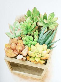A box of succulents