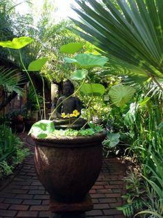 Front Entrance. Buddha statue in lotus pot. Balinese House, Balinese Garden.