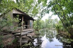 New Orleans Swamp Tour Provides Memorable Bayou Adventure