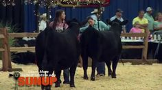 SUNUP entered the barns to see why youth love to show their livestock in the National Junior Angus Show ring.