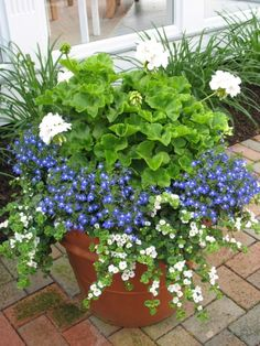 White Geraniums, blue Lobelia, and Bacopa (white trailing flowers). All do fairly well in morning sun and shade in the afternoon. Garden Planters, Garden Landscaping, Garden Containers, Patio Container Gardening, Garden Pots, Plants, Trailing Flowers, Geraniums, Garden Inspiration