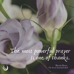 The Secret Gratitude Book Rhonda Byrne Quotes, Gratitude Book, Power Of Prayer, Little Books, Good Thoughts, First They Came, The Secret, Affirmations, Encouragement