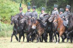 Horses in formation