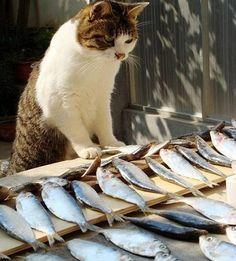So many fish, So little time !   منو این همه خوشبختی محاله !!!