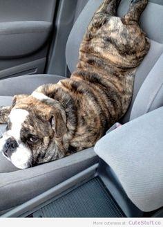 #funny #dog #cute #beautiful #animal #love