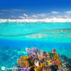 """""""A lot of people attack the sea, I make love to it."""" - Jacques Yves Cousteau https://www.facebook.com/TheSecrets.of.TheSea"""