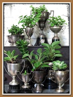 This is one great way to admire your every day! Planted Trophies - I'm really still into this idea of a trophy garden for the long-term. Air Plants, Indoor Plants, Old Trophies, Vintage Silver, Antique Silver, Cheap Home Decor, Houseplants, Home Remodeling, Floral Arrangements