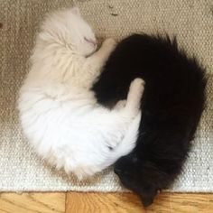 #yinyang ☯ #blackandwhite #kittens #sleeping Black Kittens, Photo And Video, Cats, Animals, Instagram, Gatos, Kitty Cats, Animaux, Animal