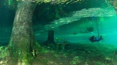 Diving Green Lake, Austria (Credit: Credit: Westend61 GmbH/Alamy)  In Tragöß, Austria, a walk in the park is anything but – at least for part of the year.  Each spring, the snowmelt from the nearby Hochschwab Mountains causes the local Grüner See (Green Lake) to nearly double in size, expanding from about 150m to 250m wide. Crystal clear water floods the surrounding area, transforming pastoral Green Lake park as the water overtakes benches and bridges.