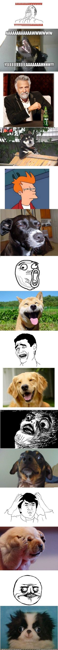 Internet Memes as Dog Photos (funny, real-life dogs)