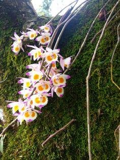 Dendrobium Orchids, Wild Orchid, Flora, Garden, Plants, Smile, Gardening, Good Afternoon, Dios