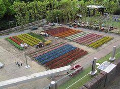 tulip-field-at-madurodam.jpg (550×412)