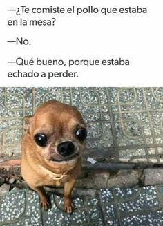 """A compilation of all my memes before deleting them: """") I update . - A compilation of all my memes before deleting them: """"] I update… # Humor # amreading # boo - Animal Jokes, Funny Animal Memes, Stupid Funny Memes, Funny Animal Pictures, Funny Animals, Cute Animals, Mexican Funny Memes, Funny Spanish Memes, New Memes"""