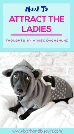 This dachshund is so on point.