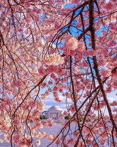 National Cherry Blossom Festival, United States #Washington Tidal Basin  #Trip #Travel #Sightseeing Spots, Superb Views #SuperbView #Destination #Spring #Flower #CherryBlossom Destinations, Flowering Trees, The Good Place, Beautiful Flowers, Places To Go, Nature Photography, Basin, United States, Washington