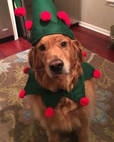 462530383b5d Pet Costume Large Dog Christmas Elf Christmas Costume With Optional Bells  Made to Order