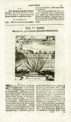 M. Valentini, Merian Botanical Prints 1719