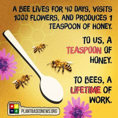 """685 Likes, 11 Comments - Let's Veganise. (@the.undisputable.vegans) on Instagram: """"Credit/Follow: @plantbasednews Bees play a vital role in the workings of our ecosystem! . A worker…"""""""