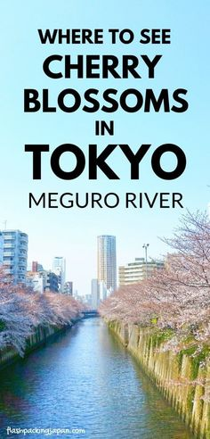 Tokyo Japan travel tips for Japan cherry blossoms in east Asia, meguro river cherry blossom promenade. Spring season in Japan. best places to visit for photo spots in Tokyo. peak season for cherry blossom time. what months is season. March, April. sakura hanami photos spots. best things to do in tokyo japan. backpacking japan culture travel ideas. #flashpackingjapan