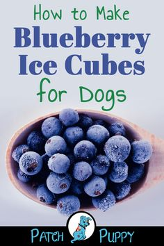 13 Homemade Frozen Dog Treats Recipes - w/Reader Favorite 3 Ingredient Dog Ice Cream Recipe Frozen Dog Treat Recipes - Blueberry Ice Cubes for Dogs Puppy Treats, Diy Dog Treats, Homemade Dog Treats, Homemade Food For Dogs, Puppy Food, Dog Biscuit Recipes, Dog Food Recipes, Ice Cubes For Dogs, Easy Dog Treat Recipes