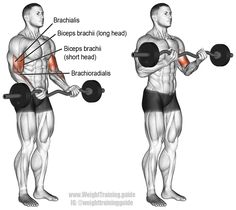EZ bar curl exercise instructions and video Compared with the barbell curl, the EZ bar curl is easier on your wrists; however, it places a little less emphasis on your biceps. Fitness Workouts, Fitness Gym, Muscle Fitness, Corps Fitness, Training Workouts, Fitness Plan, Group Fitness, Best Exercise For Biceps, Workout For Flat Stomach