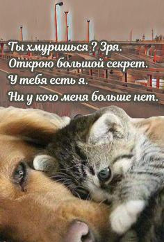 Dog Cat, Cats, Animals, Gatos, Animales, Kitty Cats, Animaux, Cat, Animal