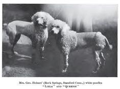 Poodles, 1901, 'Liela' and 'Queenie'