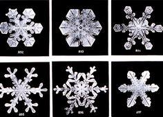 scinexx | Vielfalt der Formen: Schneekristalle