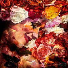 Fotografías para decorar. Composición de rosas F00135 de Wifred Llimona.  http://www.lallimona.com/foto/estilo-de-vida/