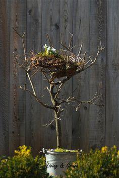 Ein Nest aus Birkenreisig auf dem abgestorbenen Olivenbaum. - Tante Mali - Google+