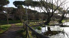 Parco degli Acquedotti by Morgan Capasso Video Clip, Plants, Flora, Plant