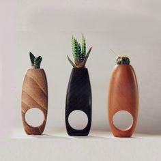 """Succulent Rings"" by Barbara Uderzo"