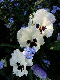 A imagem pode conter: planta, flor, atividades ao ar livre e natureza