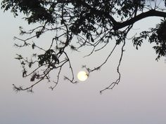 The MY tree catching the full moon. Ha, Orff!