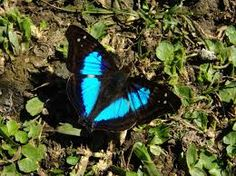 images of butterflies - Google Search