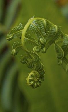 In a dark and mysterious corner of the secret garden - ferns grow.