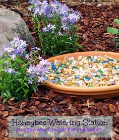 Save the Pollinators with a Honeybee Watering Station in the Garden! How to Save the Pollinators with a Honeybee Watering Station. This is a quick and easy garden DIY that will bring pollinators to your yard to boost your garden yield!