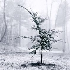 "Black and White Photography Print """"Little Tree"""""